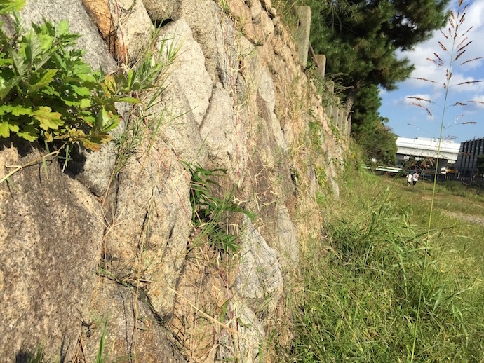 芦屋川の石垣