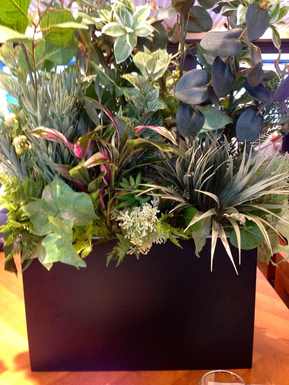 目の前に置かれた植物の鉢