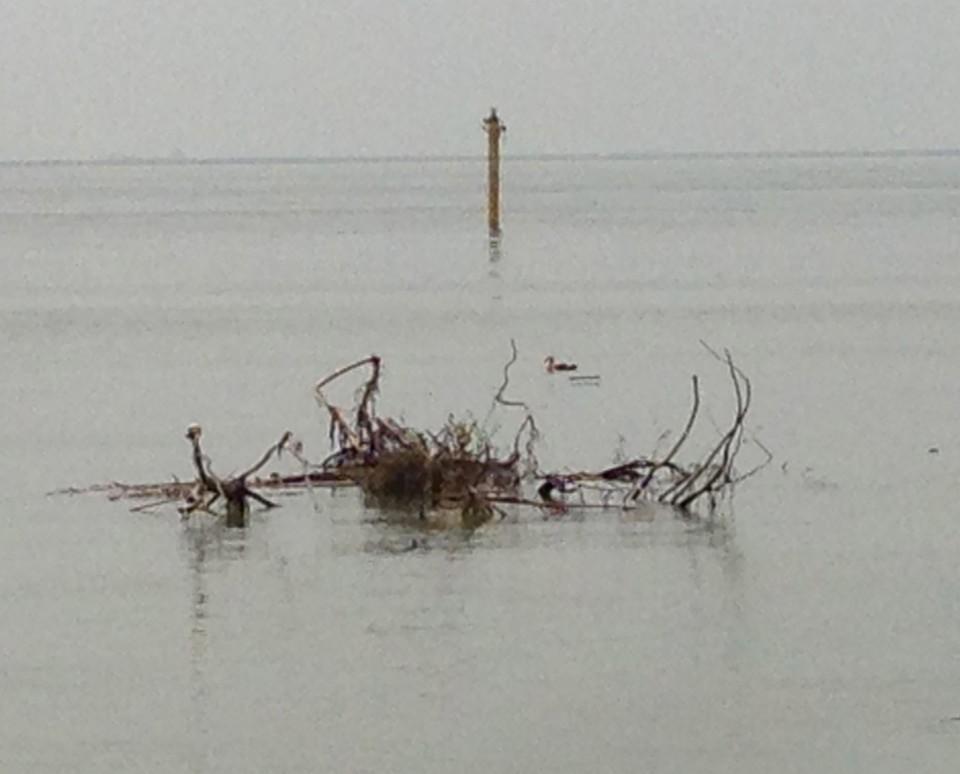 鳥の巣、になりそうな枝と海鳥