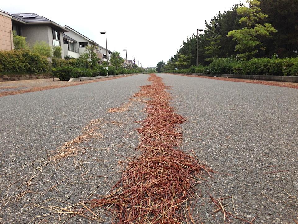 防風林から落ちた、松の枯れ枝が道につもり、通り行く車の後だけ自然に掃除されていました